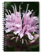 Bee Balm From The Panorama Mix Spiral Notebook