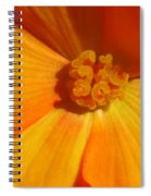 Begonia Named Nonstop Apricot Spiral Notebook