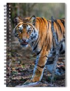 Bengal Tiger Panthera Tigris Tigris Spiral Notebook