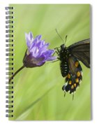 Pipevine Swallowtail Butterfly Spiral Notebook