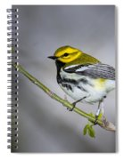 Black Throated Green Warbler Spiral Notebook