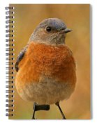 Bluebird Spiral Notebook