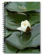 Budding Spirituality Spiral Notebook