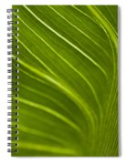 Calla Lily Stem Close Up Spiral Notebook