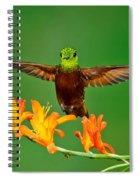 Chestnut-breasted Coronet Spiral Notebook