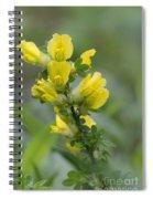 Clustered Broom Spiral Notebook