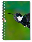 Collared Inca Hummngbird Spiral Notebook