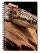 Colombian Rainbow Boa Epicrates Maurus Spiral Notebook