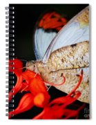 Colorful Portrait Of A Butterfly  Spiral Notebook