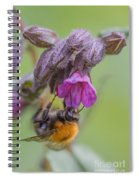 Common Carder Bee Spiral Notebook
