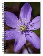 Common Hepatica Spiral Notebook