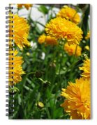 Coreopsis Named Early Sunrise Spiral Notebook