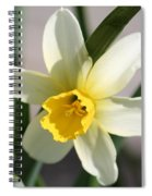 Cyclamineus Daffodil Named Jack Snipe Spiral Notebook