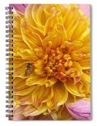 Dahlia Named Lambada Spiral Notebook