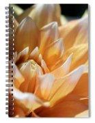 Dahlia Named Seattle Spiral Notebook