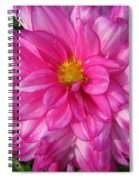 Dahlia Named Who Dun It Spiral Notebook