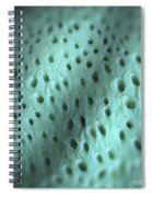 Dentine Spiral Notebook