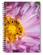 Double Click Cosmos Named Rose Bonbon Spiral Notebook