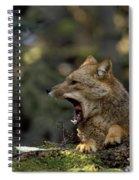 Environmental Woes Of Tierra Del Fuego Spiral Notebook