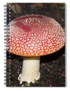 Fairy Mushrooms Spiral Notebook