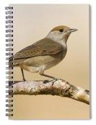 female Eurasian Blackcap Spiral Notebook