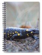 Fire Salamander - Salamandra Salamandra Spiral Notebook
