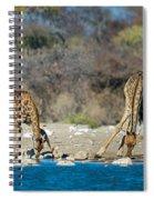 Giraffes Giraffa Camelopardalis Spiral Notebook