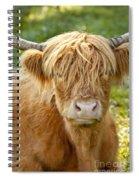 Highland Cow Spiral Notebook