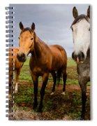 3 Horses Spiral Notebook