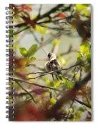 Hummingbird In Spring Spiral Notebook