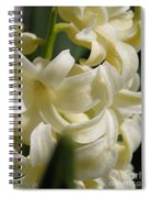 Hyacinth Named City Of Haarlem Spiral Notebook