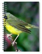 Kentucky Warbler Spiral Notebook