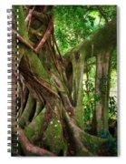 Kipahulu Banyan Tree Spiral Notebook