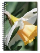 Large-cupped Daffodil Named Mrs. R.o. Backhouse Spiral Notebook