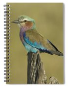 Lilac-breasted Roller Spiral Notebook