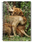Lion Cubs On The Masai Mara  Spiral Notebook