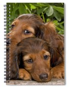 Long-haired Dachshunds Spiral Notebook