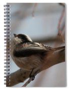 Long-tailed Tit Perched On Twig Spiral Notebook