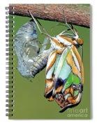 Malachite Butterfly Metamorphosis Spiral Notebook