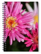 Marguerite Daisy Named Summer Song Rose Spiral Notebook