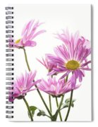 Mums Flowers Against White Background Spiral Notebook