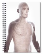 Nerves Of The Upper Body Spiral Notebook
