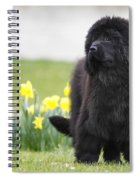 Newfoundland Dog Spiral Notebook