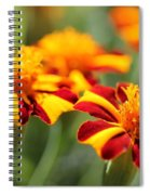 Novelty French Marigold Named Mr. Majestic Spiral Notebook