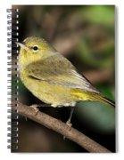 Orange-crowned Warbler Spiral Notebook