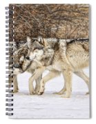 3 Pack Spiral Notebook