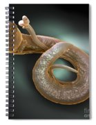 Parasitic Worm Schistosoma Spiral Notebook