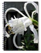 Peruvian Daffodil Named Advance Spiral Notebook