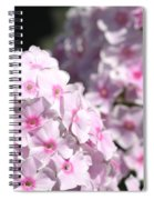 Phlox Paniculata Named Bright Eyes Spiral Notebook