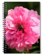 Pink Ranunculus Spiral Notebook